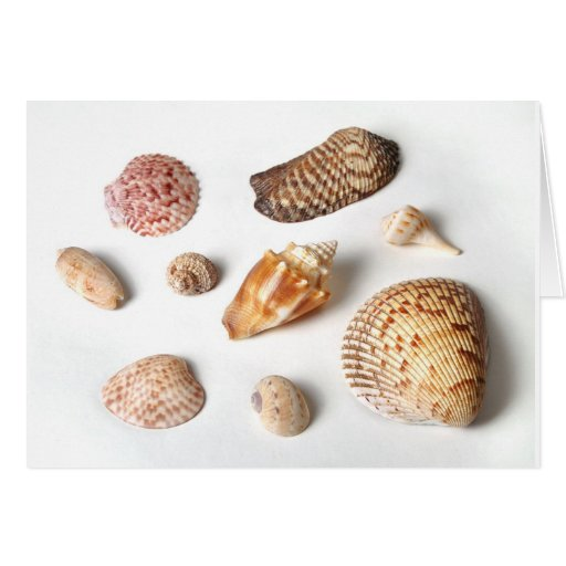 Sanibel Seashells Greeting Card