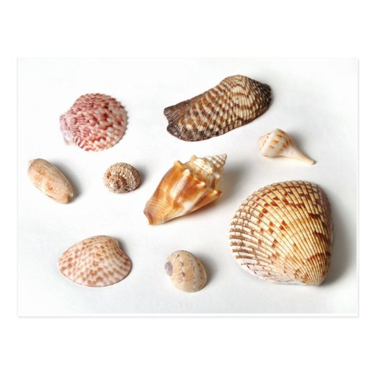 Sanibel Seashells Postcard