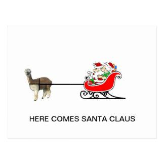 Santa And Mrs. Claus In Alpaca Sleigh Postcard