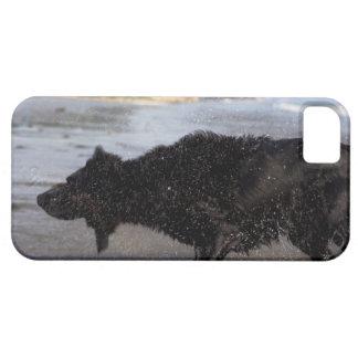 Santa Barbara, California, USA iPhone SE/5/5s Case