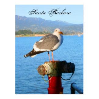 Santa Barbara Seagull Postcard