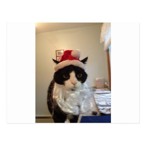 Santa Benny Cat Postcard