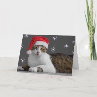 Santa Cat Card card