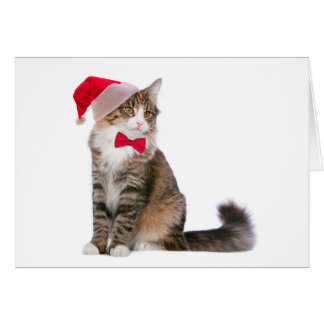 Santa Cat Christmas Card