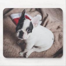 Santa claus dog -funny pug - dog claus mouse pad
