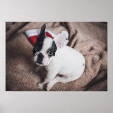Santa claus dog -funny pug - dog claus poster