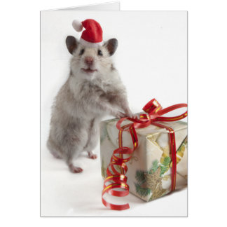 Santa Claus Hamster With Gift Card