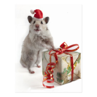 Santa Claus Hamster With Gift Postcard