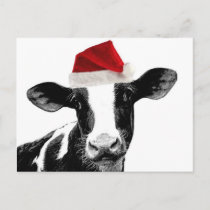 Santa Cow - Dairy Cow wearing Santa Hat Holiday Postcard