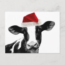 Santa Cow - Dairy Cow wearing Santa Hat Holiday Postcard