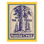 Santa Cruz California - casera de los árboles gran Postales