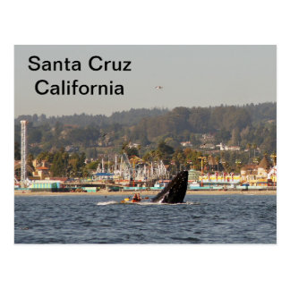 Santa Cruz, California Humpback Whale Postcard