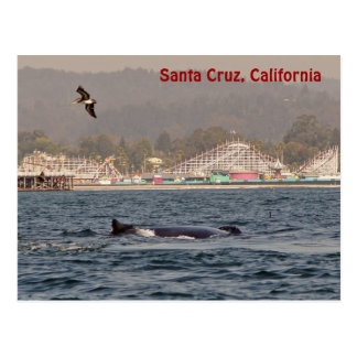 Santa Cruz, California Humpback Whale Postcard