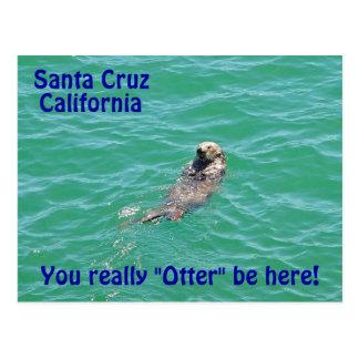 Santa Cruz California Otter Postcard