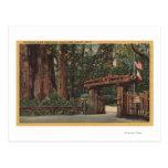 Santa Cruz County, CA Entrance to Big Trees Park Post Card