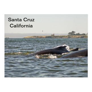 Santa Cruz, Humpbacks de CA en la postal del faro