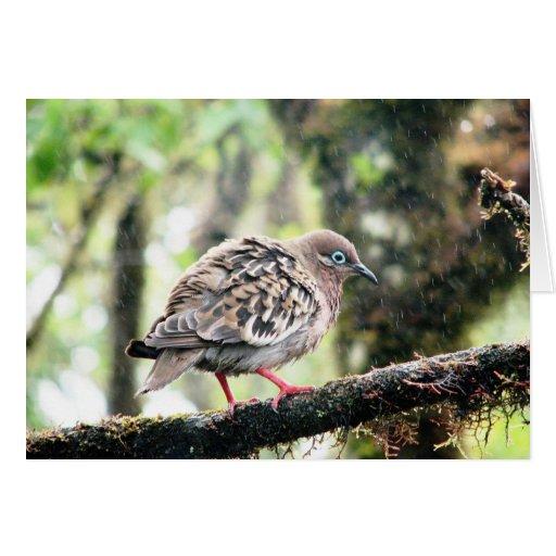 Santa Cruz Island, Galapagos, bird in rain Greeting Card