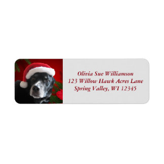 Santa Dog-Lab/Rott Mix with Pointsettia Label