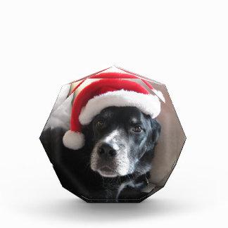Santa Dog-Labrador Rottweiler Mix Acrylic Award