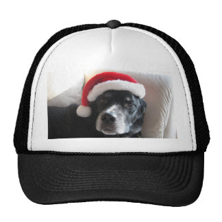 Santa Dog-Labrador Rottweiler Mix Trucker Hat