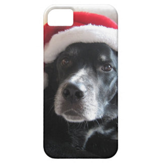 Santa Dog-Labrador Rottweiler Mix iPhone SE/5/5s Case