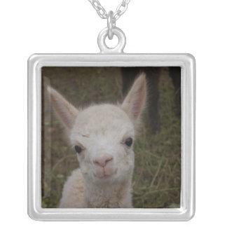 Santa el collar de la alpaca del bebé