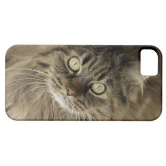 Santa Fe, New Mexico, USA. Maine coon cat. (PR) iPhone 5 Cover