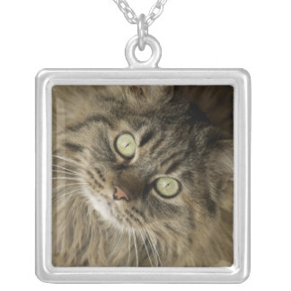 Santa Fe, New Mexico, USA. Maine coon cat. (PR) Silver Plated Necklace