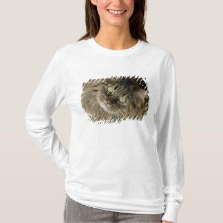 Santa Fe, New Mexico, USA. Maine coon cat. (PR) T-Shirt