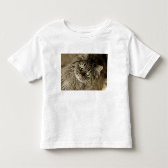 Santa Fe, New Mexico, USA. Maine coon cat. (PR) Toddler T-shirt
