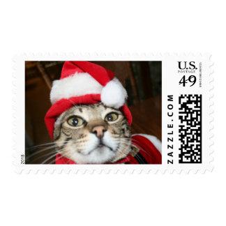 Santa Kitty Looking Stamp