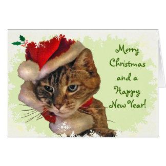 Santa Kitty with Holly Christmas Card
