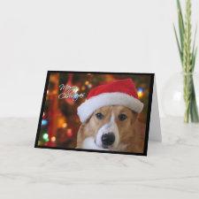 Santa Pembroke Welsh Corgi Christmas Card card