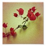 Santa Rita Flower in Warm Colors Wall Photo Photo Art
