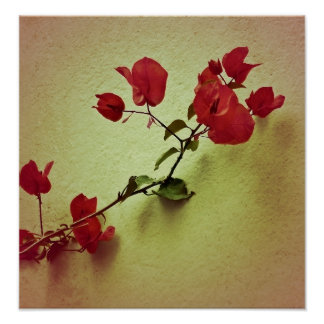 Santa Rita Flower in Warm Colors Wall Photo Poster