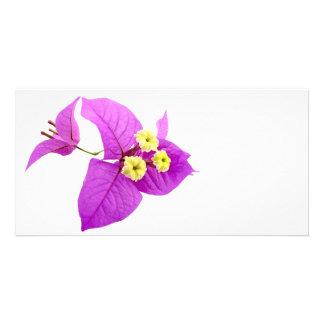 Santa Rita Flowers Card