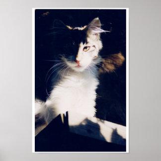 Santa Rosa Cat Poster