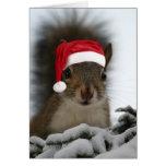 Santa Squirrel Greeting Cards