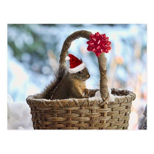 Santa Squirrel in Snow Postcard