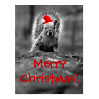 Santa Squirrel Merry Christmas Postcard