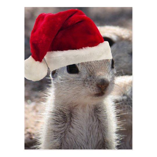 Santa Squirrel Postcard