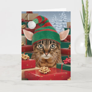 Cat christmas cards greeting photo cards zazzle santas elf cat christmas card m4hsunfo