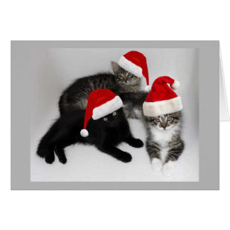 Santa's Kitten Helpers Christmas Card