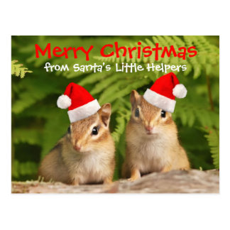 Santa's Little Helpers Baby Chipmunks Postcard