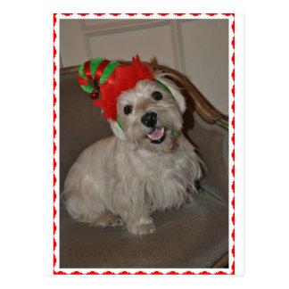 Santa's Little Westie Elf Postcard