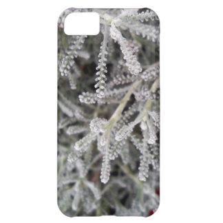 Santolina chamaecyparissus case for iPhone 5C