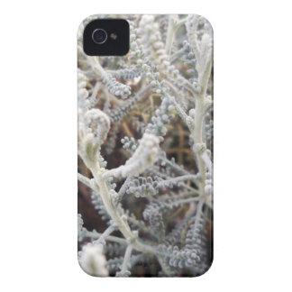 Santolina chamaecyparissus iPhone 4 case