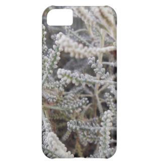 Santolina chamaecyparissus iPhone 5C case