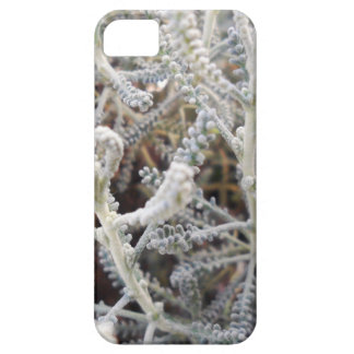 Santolina chamaecyparissus iPhone SE/5/5s case