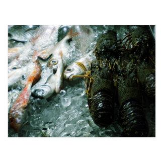 Santorini Fish Photo Colette h Guggenheim Postcards